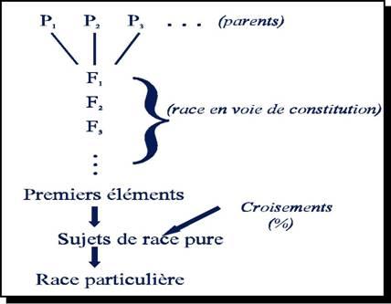 diagramme montrant l'évolution d'une race