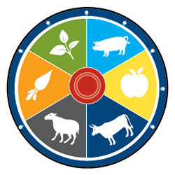 Pie chart displaying carrot, plant, pig, apple, cow and sheep in equal parts.