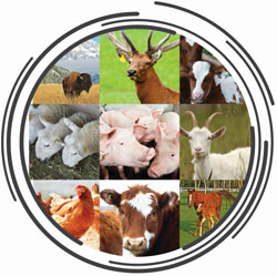 Collage of photos displaying bison, deer, cows, sheep, pigs, goat, chickens, and horses.