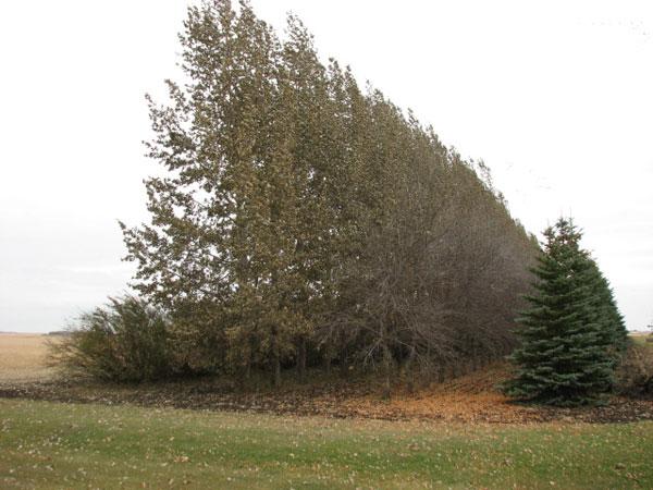 Une rangée d'arbres.