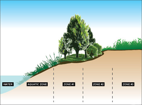 An effective riparian buffer strip has two to three vegetation zones, each parallel to the water body