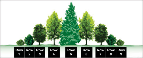 An illustration of a nine row shelterbelt, featuring trees and shrubs. The centre row is the tallest species, flanked on either side by increasingly smaller species.