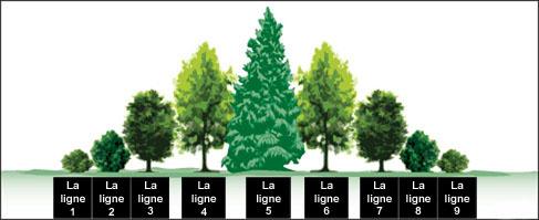 Une illustration d'un brise-vent à neuf rangées comprenant des arbres et des arbustes. La rangée du milieu est formée de l'essence la plus grande flanquée de chaque côté d'essences progressivement plus petites.