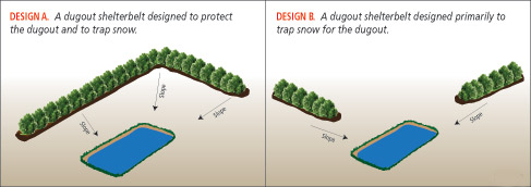 Diagram showing planting designs to protect a dugout and trap snow.