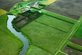 Riparian buffer is planted to create a buffer zone between agricultural land and bodies of water