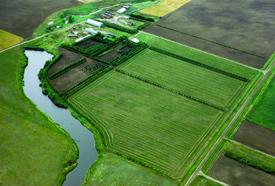 On plante de la végétation dans les bandes riveraines pour former une zone tampon entre les terres agricoles et les plans d'eau