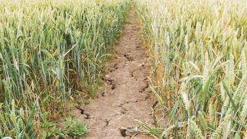 Gestion des entreprises agricoles
