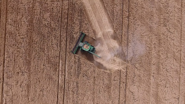 A green combine harvester is shown from high above a wheat field, navigating a sharp right turn.