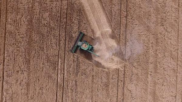 Une moissonneuse-batteuse verte est montrée du haut des airs en train de négocier un virage serré à droite dans un champ de blé.