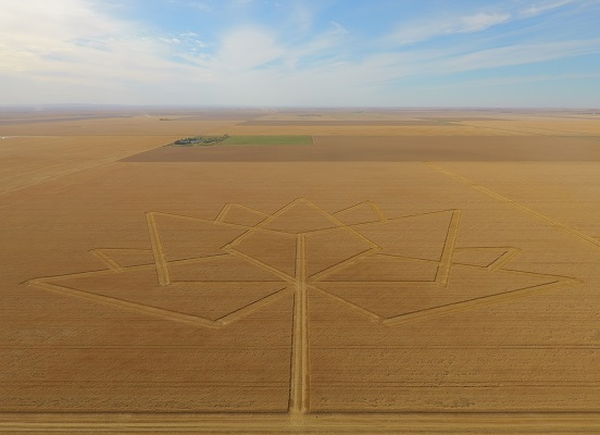 The Canada 150 logo cut into a field of golden durum wheat is shown from high above.