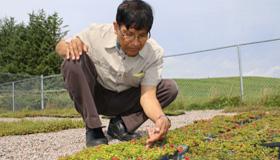 Dr. Samir Debnath kneels next to a crop of lingonberries