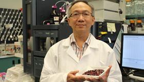 Dr Chris Siow tenant un contenant rempli d'airelles