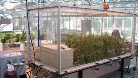 Pots de plants d'orge qui poussent dans une chambre en verre à l'intérieur d'une serre.