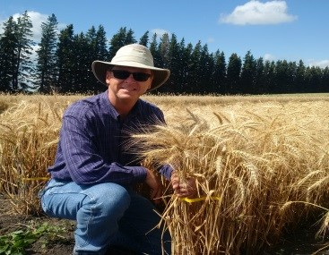 Dr. Robert Graf kneels in a wheat field, facing the camera and holding a bunch of wheat.