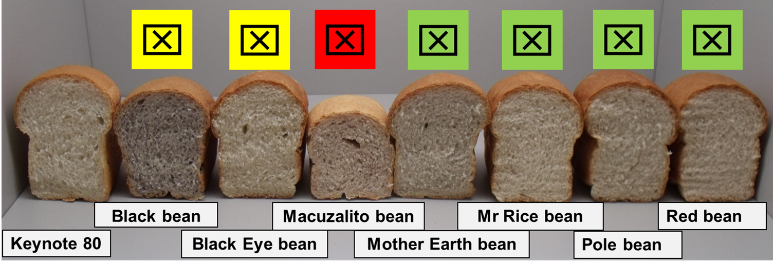 "Shown side by side, eight loaves of bread made with a percentage of bean flour. The loaves of bread differ in volume, depending on what type of flour was used. A coloured ""X"" above each loaf indicates the best options. Green X (the four best options): loaves made with Mother Earth, Mr Rice, Pole and Red bean flours. Yellow X (two lower-quality options): loaves made with Black and Black Eyed bean flours. Red X (poorest option): loaf made with Macuzalito bean flour."