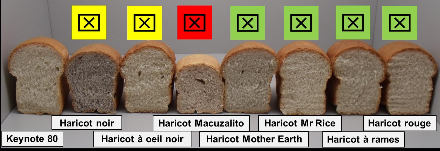 Côte à côte, huit variétés de pains produits avec un pourcentage de farine de haricots. Les pains n'ont pas le même volume selon la farine utilisée. Au-dessus des pains il y a un ''X'' de couleur pour indiquer les meilleures options. Avec un X vert (les 4 meilleures options) : pains à la farine de haricot Mother Earth, Mr Rice, Pole et Red. Avec un X jaune (2 variétés de qualité moindre) : pains à la farine de haricot Black et Black Eyed. Avec un X rouge (la moins bonne option) : pain à la farine de haricot Macuzalito.