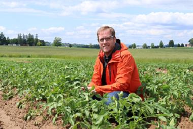 A biologist squats down among potato plants.