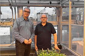 Le chercheur Martin Laforest et son adjoint de recherche, M. Brahim Soufiane, à l'intérieur d'une serre, avec à l'avant-plan un bac de petits plants de mauvaises herbes.