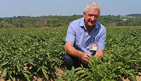 Man kneeling in a field of potato plants.