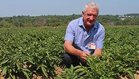 Homme accroupi dans un champ de pommes de terre.