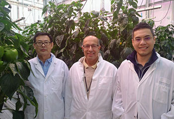Three men, all wearing white lab coats and smiling, standing in the Harrow Research and Development Centre greenhouse, surrounded by leafy, vertically growing plants.