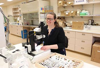 La chercheuse Meghan Vankosky étudie des espèces d'insectes envahissantes sur des épingles.