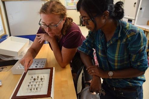 Deux scientifiques examinant des insectes épinglés dans un laboratoire.