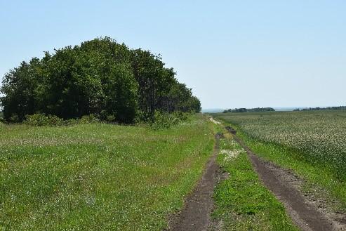 Sillon de route non entretenu, bordé de cultures des deux côtés, ainsi que d'arbres à la gauche.