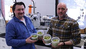 Des chercheurs montrant des contenants de houblon sauvage en laboratoire.
