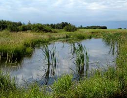 a pond or standing water body in a grassland area.