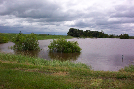 Flooded reservoir with partially submerged bushes