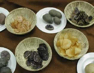 Variety of potato products: chips, boiled and fried potatoes