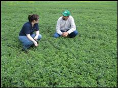Photo: Troy LaForge, manager of a leading consulting firm at Swift Current (shown here on the right with a Research Scientist from Australia, at a chickpea field of southern Saskatchewan)