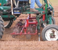 Cultivation practice: Stale seedbed in combination with basket weeder