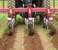 Cultivation practice: Tillage using S-tines with or without duckfoot