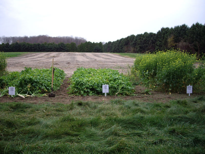 Farm field showing growing crops, placards next to plants