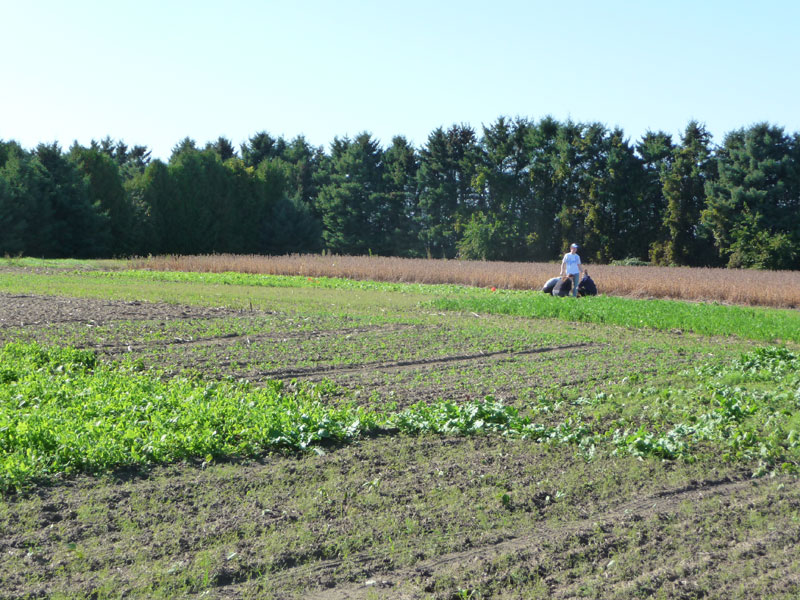 Farm field showing growing crops
