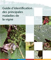 Page couverture de la publication - Guide d'identification des principales maladies de la vigne