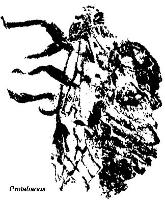 Illustration of a Protabanus cicada fossil