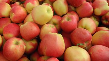 les pommes Ambrosia