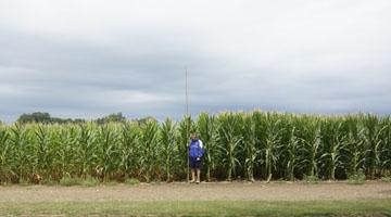 Homme debout dans un champ de maïs; les épis de maïs à droite sont plus hauts