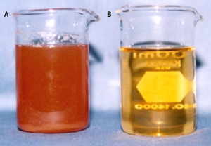 Figure 2: Juice before (A) and after (B) clarification