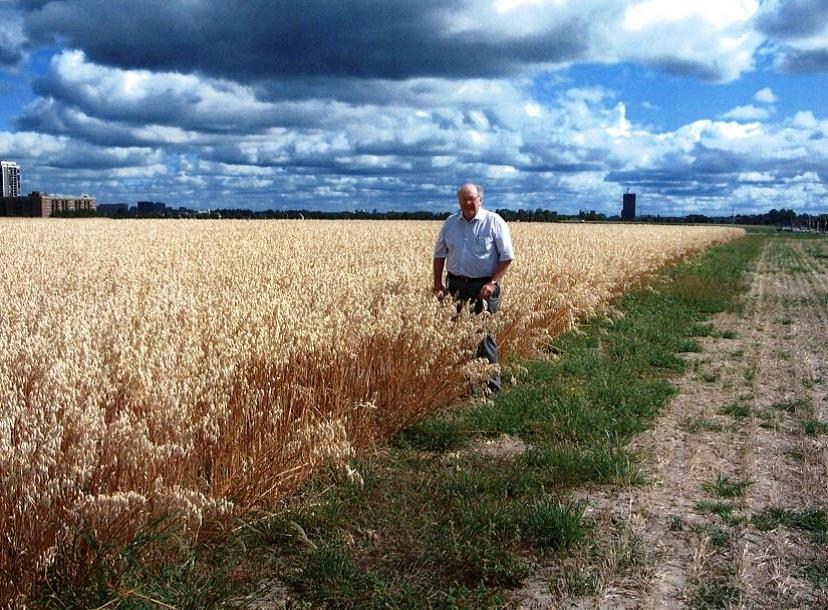 Dr. Vern Burrows in a field of oats