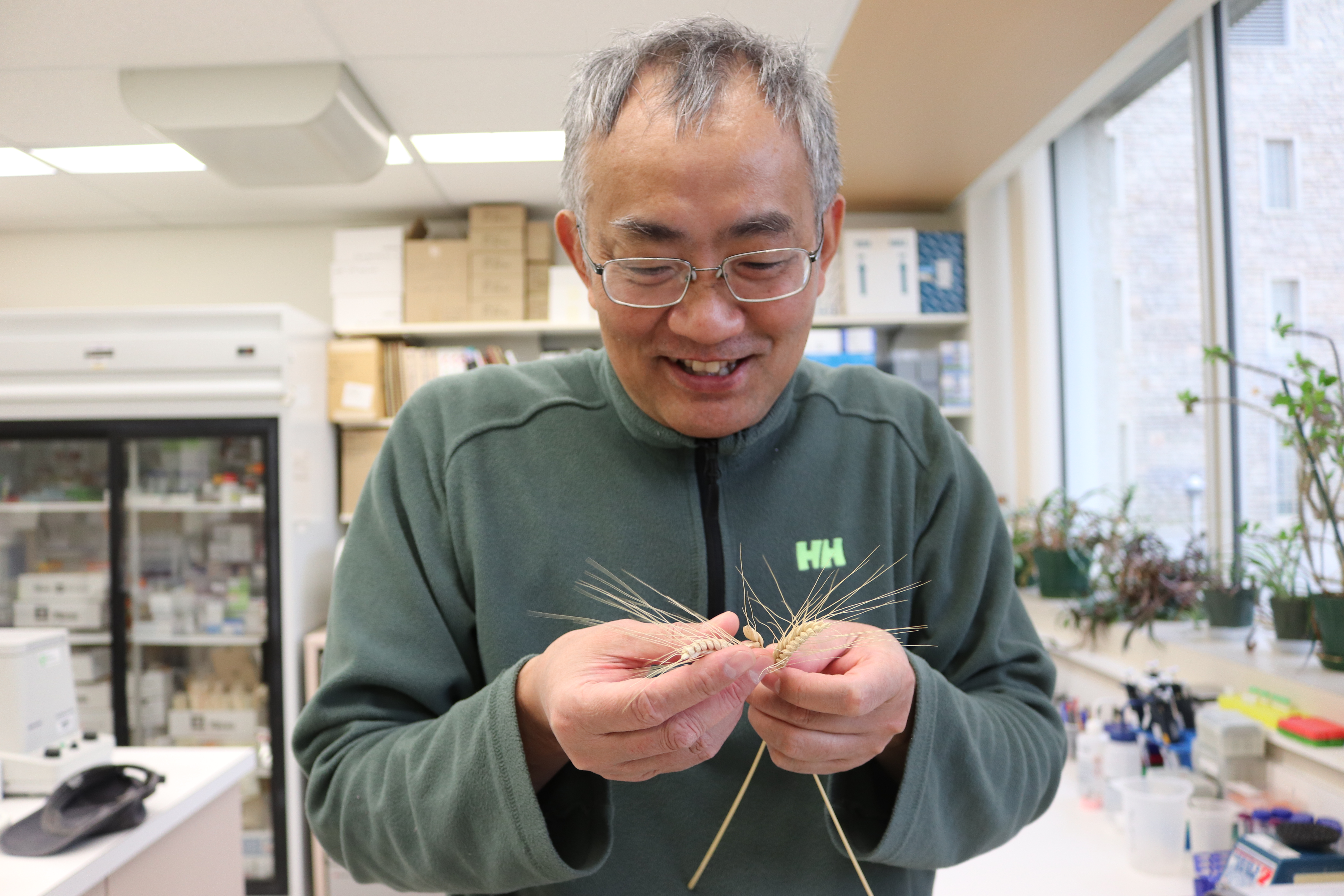 Dr. Fu stands in his lab and inspects a dried head of emmer.