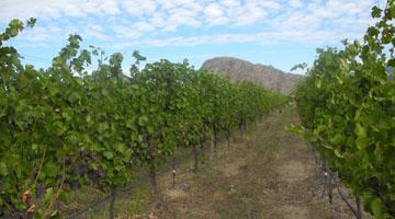 un vignoble en Colombie-Britannique