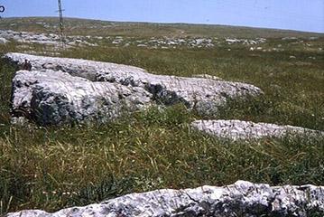 Une zone enherbée et rocailleuse où pousse l'amidonnier sauvage.