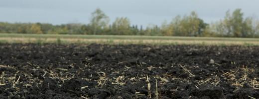 le sol des terrains