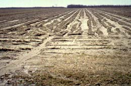 Field damaged by many runnels.