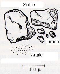 Les particules de sable (environ 100 micromètres de diamètre) sont plus grandes que les particules de limon (environ 20 micromètres de diamètre) qui sont plus grandes que les particules d'argile.