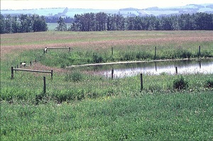 Fence around a water source in a pasture